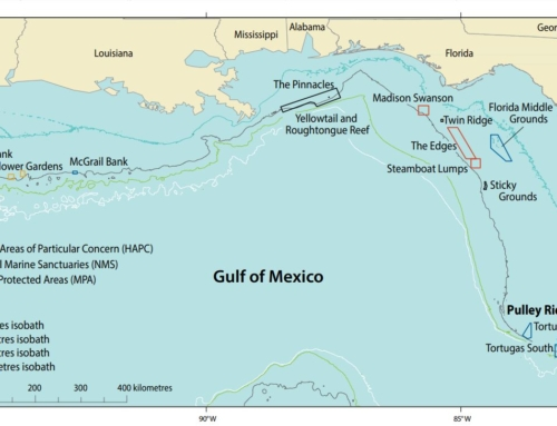 Pulley Ridge, Gulf of Mexico, USA