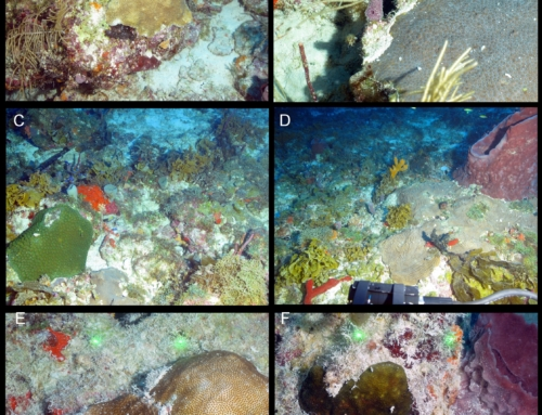 Characterization of the Mesophotic Coral Reefs in the Florida Keys National Marine Sanctuary