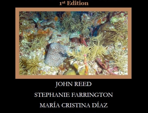 Photo Identification Guide of the Benthic Taxa Inhabiting the Mesophotic Reefs of the Florida Keys National Marine Sanctuary